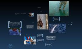 Deepwater Horizon: spill in the gulf!