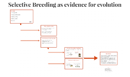 Copy of Copy of Selective Breeding as evidence for evolution