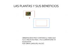 LAS PLANTAS Y SUS BENEFICIOS