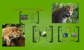 Jaguars( Panter Onca)