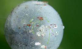 Morfologia y estructuras fungicas