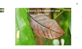 Chapter 3 Lesson 3 Adaptation and Survival
