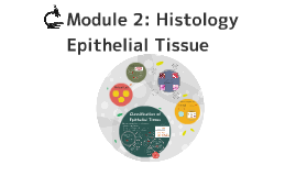 Module 2: Epithelial Tissue