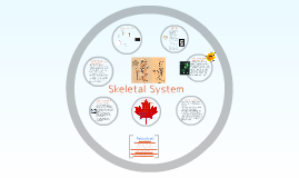 Sketetal System