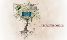 Cercopithecoidea
