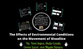 Copy of Woodlice