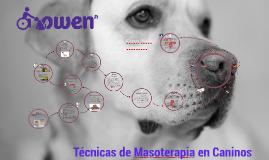 Masoterapia Canina