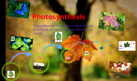 Copy of photosynthesis prezi