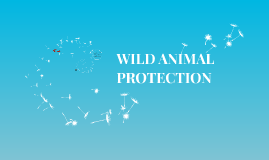 Copy of WILD ANIMAL PROTECTION