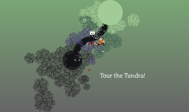 Tour of the Tundra