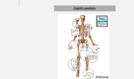 Ciencias Biológicas Esqueleto apendicular