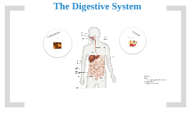 journey through the digestive system essay Continue the capsule journey through the digestive system observing the colon a journey through the intestine - teacher's guide (human biology.