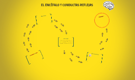 Copy of EL ENCÉFALO Y CONDUCTAS REFLEJAS