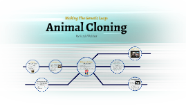 benefits and problems of cloning The pros of human cloning here are the primary benefits to the science of human cloning: defective genes could be eliminated genetic illnesses are not a leading killer of people today, but they could be in the near future.