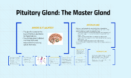 Copy of  Pituitary Gland