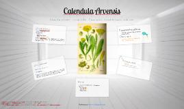 Plantas medicinales - Calendula Arvensis (Caléndula)