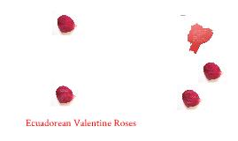 Ecuadorean Valentine Roses