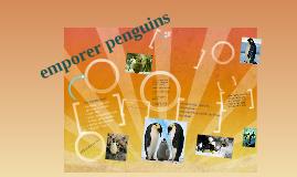 Copy of emperor  penguin