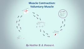 Copy of Muscle Contraction: Voluntary Muscle
