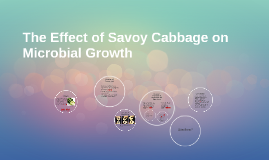 The Effect of Savoy Cabbage on Microbial Growth
