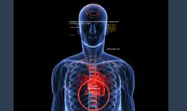 Fisiología del Sistema Cardiovascular: