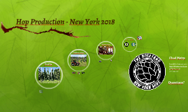 Hop Production - New York 2018
