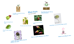 plants,animals,and the human body