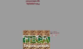 """DOENÇAS DA ESPÉCIE Tectona grandis (""""TECA"""")"""