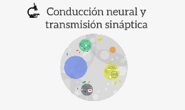 Copy of Conducción neural y transmisión sináptica