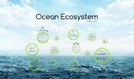 Jadyn -Ocean Ecosystem- Ellie