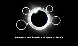 Structure and Function of Sense of Touch