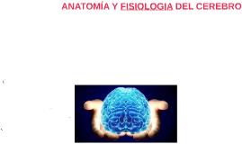 ANATOMÍA Y FISIOLOGIA DEL CEREBRO