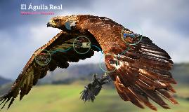 Copy of el aguila real