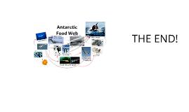 Copy of Antarctic Food Web