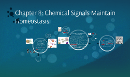 Chapter 8: Chemical Signals Maintain Homeostasis
