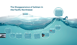 The Disappearance of Salmon in the Pacific Northwest