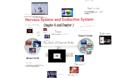 Copy of 18--Nervous System and Endocrine System