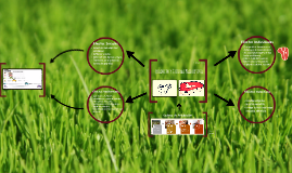 Producto y Sistema Productivo - CARNE Y VACA