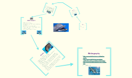 the life cycle of a dolphin by cassandra e on prezi