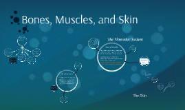 Bones, Muscles, and Skin