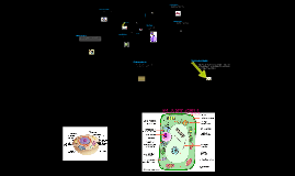 Copy of Organelles