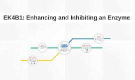 EK4B1: Enhancing and Inhibiting an Enzyme
