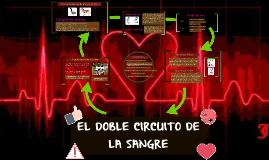 Copy of EL DOBLE CIRCUITO DE LA SANGRE
