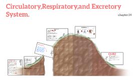 Circulatory,Respiratory,and Excretory System