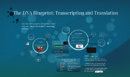 The dna blueprint transcription and translation by alexander the dna blueprint transcription and translation by alexander pistell on prezi malvernweather Choice Image