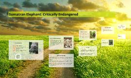 Sumatran Elephant: Critically Endangered