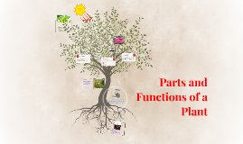 Parts and Functions Of A Plant