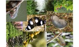 UNILEVI Biodiversidad