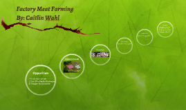 Factory Meat Farming