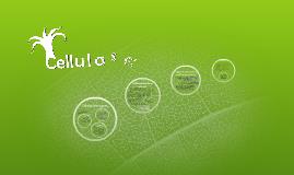 Cellulase